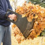 Fall Landscaping Clean Up